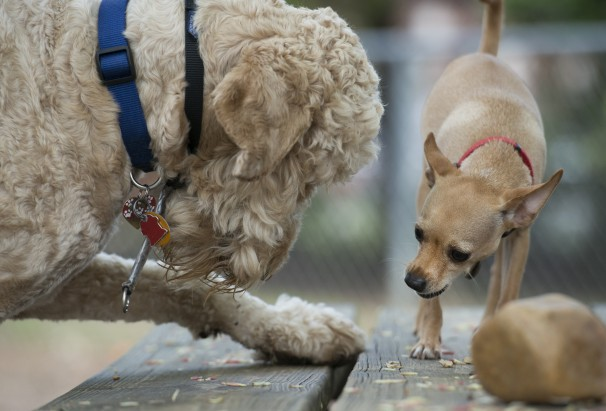 dog's play
