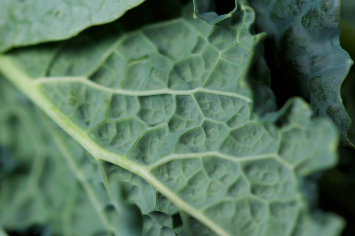 dino kale from the garden//wanderaven