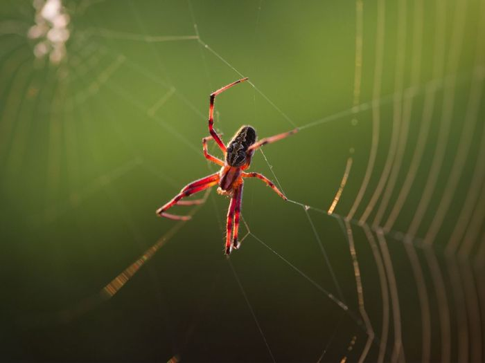spiders listen to their webs//wanderaven